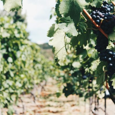 Five Tips for Having an Amazing Napa Valley Getaway