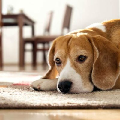 Is it Safe to Give My Dog Aspirin?