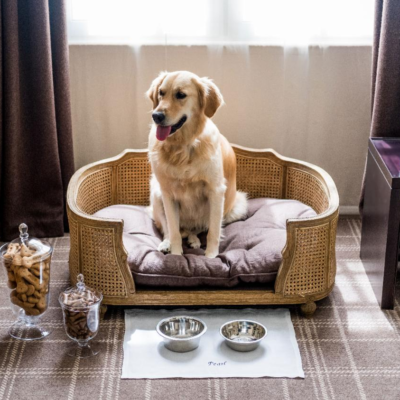 Finding Luxury Dog-Friendly Cottages in Scotland