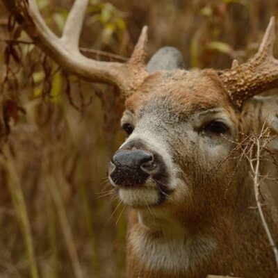 Deer Hunting Tips: 8 Scent Control Tips to Help You See More Deer