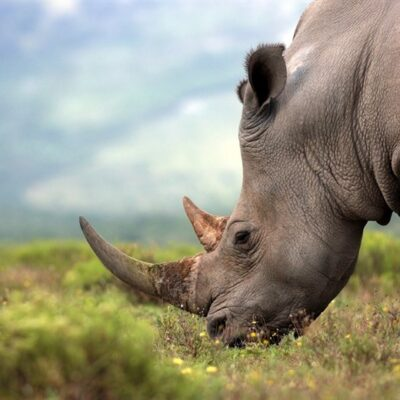 Top 10 Destinations for First Time African Safari Goers