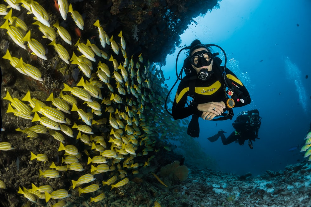 two people scuba diving underwater