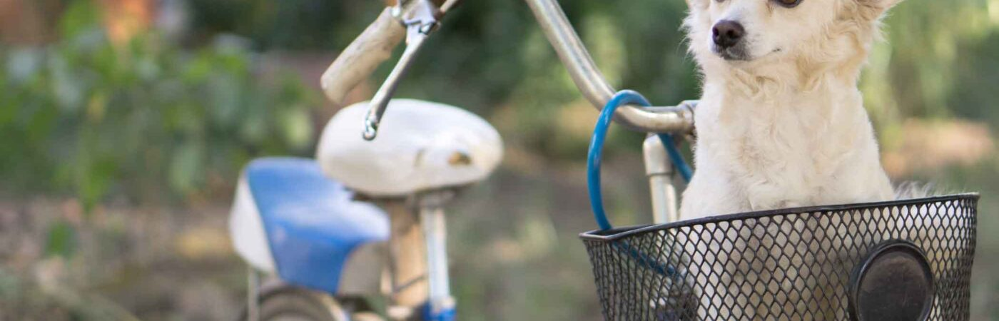 How To Train Your Puppy To Stay in the Bike Basket